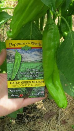 Hot Pepper Recipes, Agriculture, Growing Peppers, Pepper Seeds, New Mexican, Square Foot Gardening, Vegetable Garden, Veggie Gardens, Container Gardening