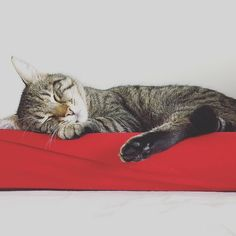 It's Caturday. Movement is optional.  #luckythecat #love #cute #catsofsalzburg #unterfoehring #germany #cat #meow #ilovemypet #catlovers #lovekittens #instapet #catsagram #kitten #kitty #catstagram #kittycat #catsofinstagram #ilovemycat #catlove #catoftheday #furry #cats_of_instagram #cats #catlife #katze #katzenliebe #miezekatze #bestmeow