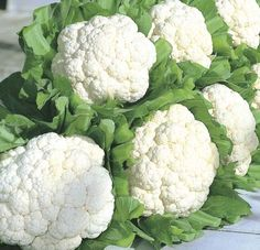 "Cauliflower ""Snow Crown"" 1979 AAS Winner is always mild and sweet. Its vigor and rapid growth make it one of the easiest to grow of all early cauliflower varieties. It forms fully domed curds in heads 7-8 inches across, weighing 1-2 pounds. This variety maintains its prime eating quality for up to 10 days in the garden. May manifest a delicate pink blush when maturing in the hotter parts of summer. Needs fertile organic soil and moisture."