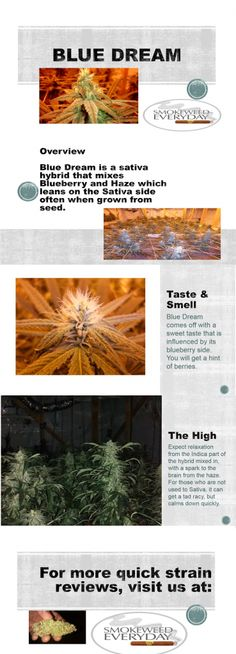 Blue Dream #Weed Smokeweedeveryday.org for More Reviews!