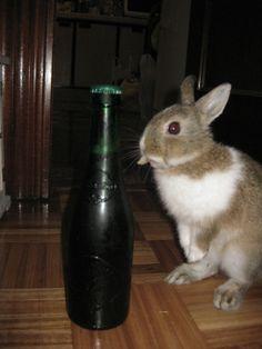 ¿Cervecita?