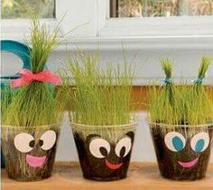 pflanzen wachsen erleben