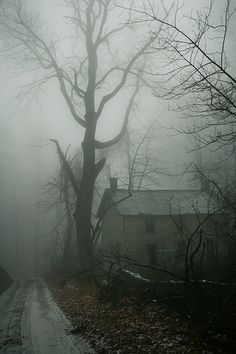 eerie landscape photograph fo house and tree in fog Spooky Places, Haunted Places, Haunted Houses, Abandoned Buildings, Abandoned Places, Belle Photo, Mists, Art Photography, Fall Nature Photography