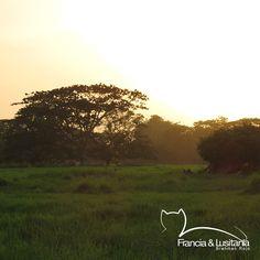 Postales de nuestras haciendas #BrahmanRojo  #Montería  #Ganadería  #Colombia #Pasion @asocebu @fedegan #HaciendasFranciaYLusitania