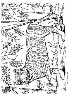 Coloriage d'un tigre dans la jungle