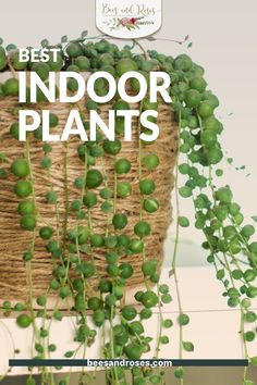 Indoor plants are all the rage this year and I can't wait to see my friends all develop their houseplant collection. These are some of my favorite houseplants of the year, so why not get started growing them ASAP? #plantcare #indoorplants #beesandrosesblog Best Indoor Hanging Plants, Outdoor Plants, Low Light Plants, Plant Guide, Hardy Plants, Bedroom Plants, Plant Shelves, Snake Plant, Plant Holders