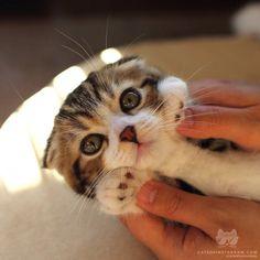 From @yayoi89: Hello cutie #catsofinstagram [source: http://ift.tt/2bxXCeK ]
