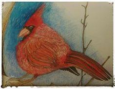 pencil crayon drawing of a cardinal