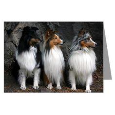Beautiful dogs!