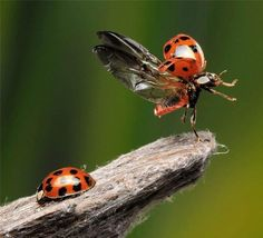 Incredible photo of a liftoff by a ladybug by Scott Linstead