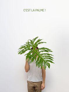 infographie sur les effets de l'huile de palme, et qui vous apprend enfin comment vous en débarrasser, vraiment !