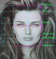 facial proportions ile ilgili görsel sonucu