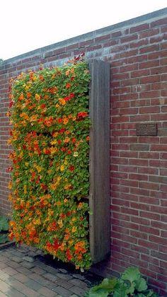 Vertical Flower Garden - a great way to grow edibl...