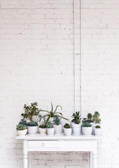 .Não tem desculpa para não ter uma plantinha em casa!