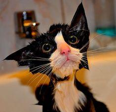 Les meilleures photos touchantes de pauvres petits chats tout mouillés