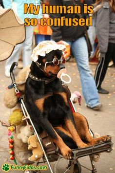 funny-dog-picture-dog-human-is-confused