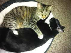 They love each other!