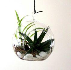 recipientes de vidrio colgantes para nuestras plantas.