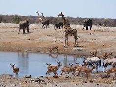 Open de galerij Rondreis Namibië & Botswana 4x4 - Suikerbossie Africa Travel