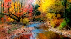 Shop for Designart - Autumn Reflecting in River - Landscape Artwork Print - Orange. Get free delivery On EVERYTHING* Overstock - Your Online Art Gallery Store! Artwork Prints, Canvas Art Prints, Painting Prints, Acrylic Paintings, Native American Flute, Nature Music, Landscape Artwork, Fall Wallpaper, Relaxing Music