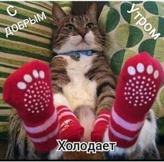 I Love Cats, Cute Cats, Funny Cats, Miss You Images, Animals And Pets, Cute Animals, Little Kitty, Good Mood, My Animal