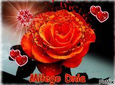 Good Morning, Candles, Lights, Flowers, Roses, Fire, Humor, Buen Dia, Bonjour