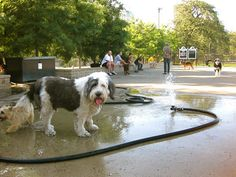 New & Improved Dog Park Coming to A. Montgomery Ward Park in River North, Chicago