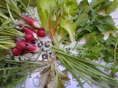 Maj Pierwsze warzywa z balkonu na śniadanie czyli w pogoni za smakiem  http://zapuszczamkorzenie.blogspot.com/