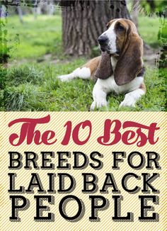 10 Best Breeds for Laid Back People (that's me!)