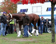 American Pharoah (Breeders' Cup Classic) arrives at Keeneland on October 27, 2015. Photo By: Chad B. Harmon