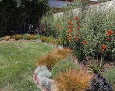 Image result for garden pittosporum silver sheen
