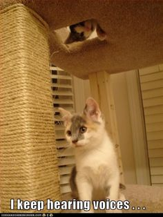 dilute calico kittens in cat play tower, ICanHasCheezburger caption