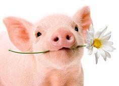 Piggie with a flower.
