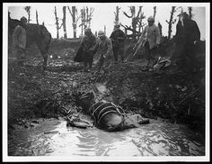 exhausted mule in a shell hole | france c.1918