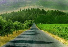 Kefraya, Bekaa, Lebanon's wine region