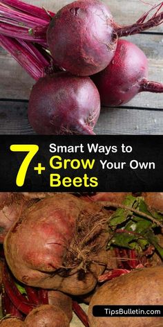 Discover great tips and tricks for growing Beta vulgaris in full sun. Enjoy harvesting beets at least twice each year, and don't forget to use Chioggia or Detroit dark red beet greens in salads and side dishes. #howto #grow #beets #gardening Gardening For Beginners, Gardening Tips, Vegetable Gardening, Beet Plant, Growing Vegetables Indoors, Backyard Farmer, Natural Ecosystem, Red Beets