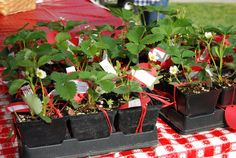 Strawberry Festival Roanoke Thursday May 2 presented by Community School Free Admission Click here to go to the page for the offer going on for  A CHOCOLATE DIPPED BERRY