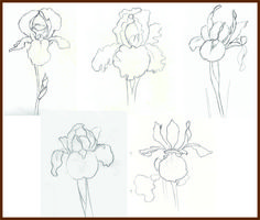 How to draw a gardenia step by step flowers pop culture for How to draw flo
