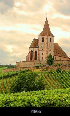 What a dream! The vineyards of France. this is Junawihr winery ~ Alsace, France Places Around The World, Oh The Places You'll Go, Travel Around The World, Places To Travel, Places To Visit, Around The Worlds, Haute Marne, Belle France, Chamonix