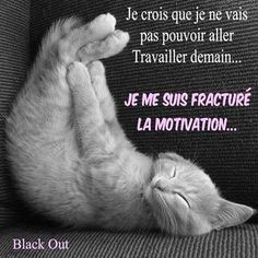 Je me suis fracturé la motivation. Quotes Español, Funny Quotes, Funny Cats, Funny Animals, Quote Citation, French Quotes, Reading Time, Positive Attitude, Motivation Inspiration