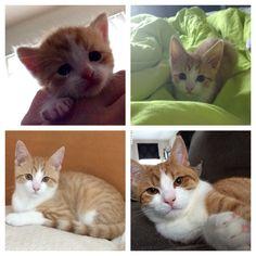 Kleine katjes worden groot; mei/juli/aug/okt 2014