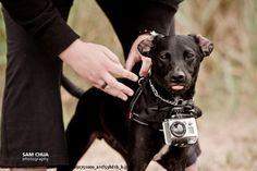 Labrador Walter bekommt eine Go Pro-Kamera umgeschnallt und freut sich riesig auf das Meer  Interessante Neuigkeiten aus der Welt auf BuzzerStar.com : BuzzerStar News - http://www.buzzerstar.com/labrador-walter-bekommt-eine-go-prokamera-umgeschnallt-und-freut-sich-riesig-auf-das-meer-d989bbffb.html