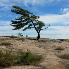 Killbear Provincial Park, Ontario, Canada  Photo credit: Michelle Simone True North, Beautiful World, Great Places, Photo Credit, Ontario, Parks, Road Trip, Beautiful Pictures, Country Roads