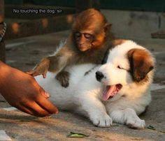 no touching the dog, sir.