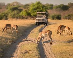 This small, sprawling town makes a fantastic side trip to any Botswana safari holiday and is a must-see destination to any visitor Africa Destinations, Top Travel Destinations, Vintage Safari, Safari Holidays, Safari Adventure, Africa Travel, Stargazing, Vacation Spots, Trip Advisor