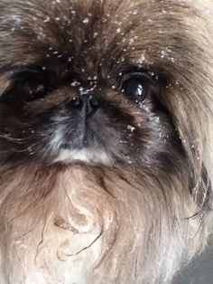 "Click visit site and Check out Cool ""Pekingeses"" T-shirts. This website is outstanding. Tip: You can search ""your name"" or ""your favorite shirts"" at search bar on the top."