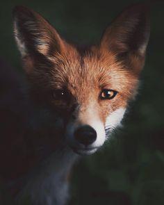 Fotógrafo captura incríveis retratos de animais selvagens
