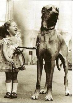 Menina e seu Dog Alemão.