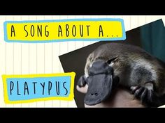A Platypus song for children by Poco Drom Reading Street Kindergarten, Platypus, Australian Animals, Kids Songs, Happy People, Cool Names, Animals For Kids, Mammals, Activities For Kids