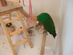 Homemade foraging toys for pet parrots -- website with lots of fantastic ideas to alleviate boredom & give parrots the chewing/foraging they need